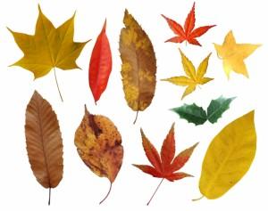 秋冬のリスティング広告